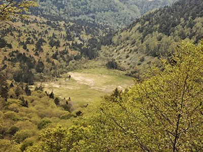 安房湿原の景色