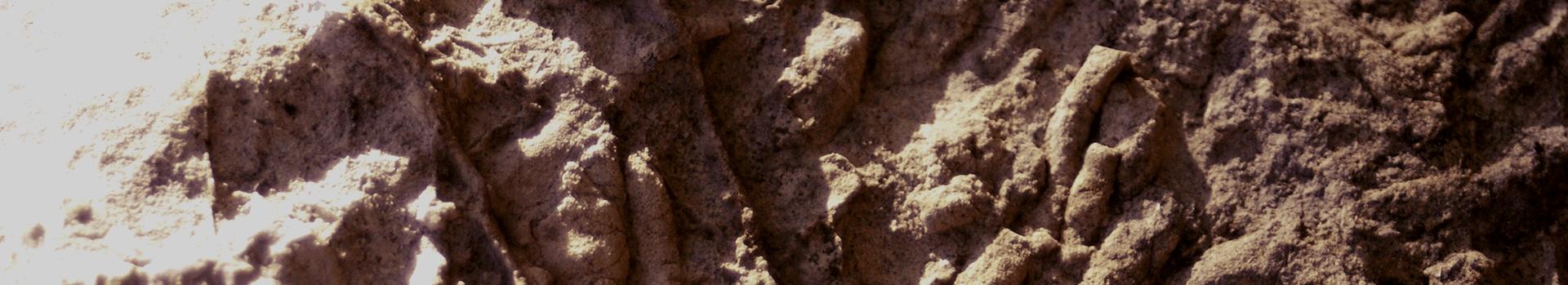 福地化石産地ページトップ