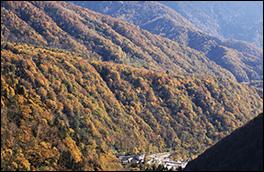 鍋平高原自然散策道の風景画像