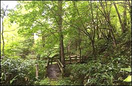 平湯自然探索路風景画像