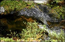 優黒色泥岩の風景